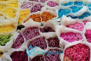 Pak Klong Talat Flower Market